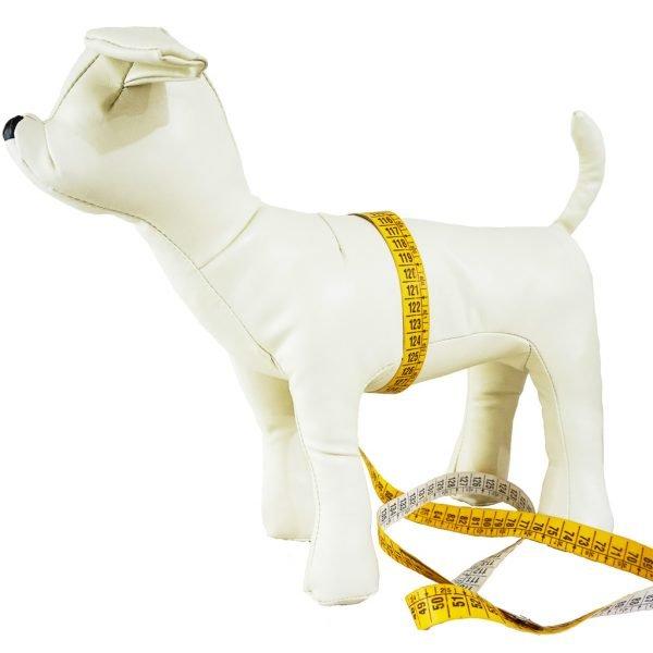 taglie-misura-cane